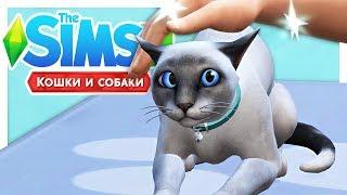 ВРЕМЯ СТЕРИЛИЗАЦИИ 🔪\The Sims 4: Кошки и собаки #6
