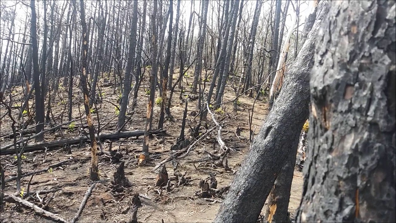Roaring Fork Fire Damage Great Smoky Mountains Gatlinburg