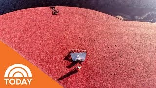 How Ocean Spray Jellied Cranberry Sauce Is Made | TODAY