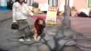 お正月に、多摩市のラフェット多摩でライオン犬発見!!!