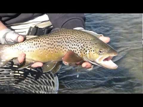 Strip'n Trip'n: Fall Fly Fishing In Montana