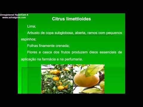 Apresentação Família Rutaceae
