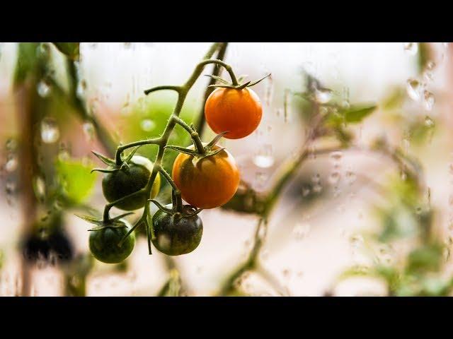 Indoor / outdoor vegetables home garden DIY - Jardin intérieur / extérieur
