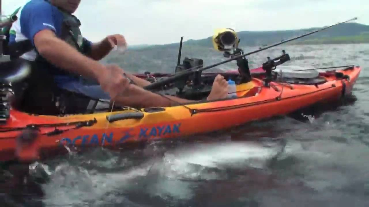 Kayak Shark Fishing Australia Kayak Attacks Shark