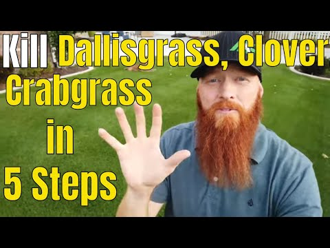 kill-crabgrass,-dallisgrass,-clover-in-5-easy-steps.-oxalis,-morning-glory-and-crabgrass-killer.