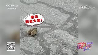 [热话]操心的刺猬妈妈| CCTV社会与法 - YouTube