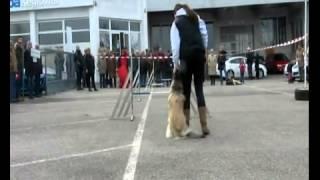 Hundesportvorführung im Autohaus Keglovits