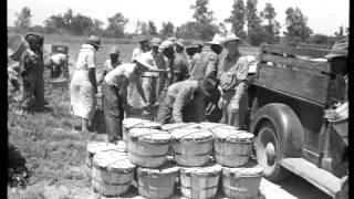Supply & Demand: Farmers in the 1930's (DLP Sample)