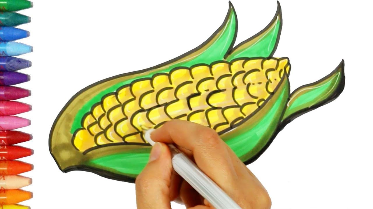 how to draw and color a corn drawing and coloring corn how