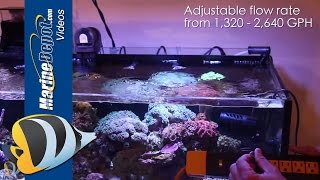 Cobalt Aquatics Neo-Flow In-Tank Demo