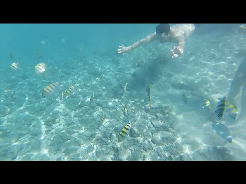 Swimming in Cuba - GoPro Session