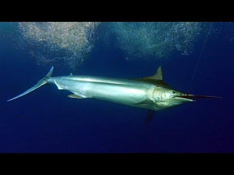 Big Game Fishing Rodrigues - Rod Fishing Club - Mauritius - Indian Ocean