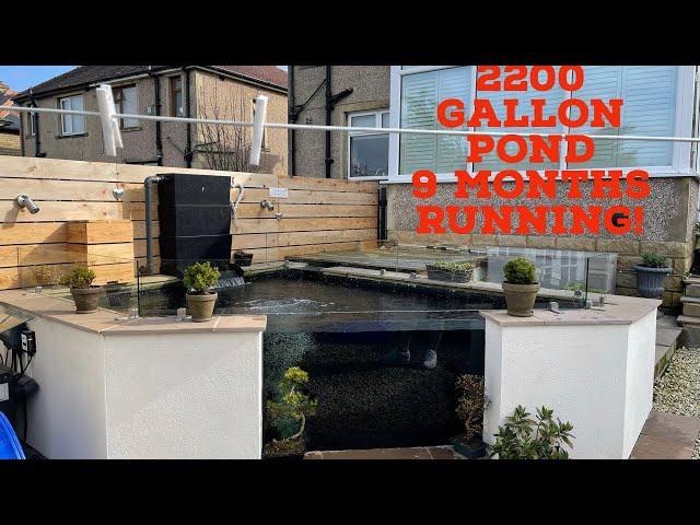 2200 Gallon Koi Pond - 9 Months running!
