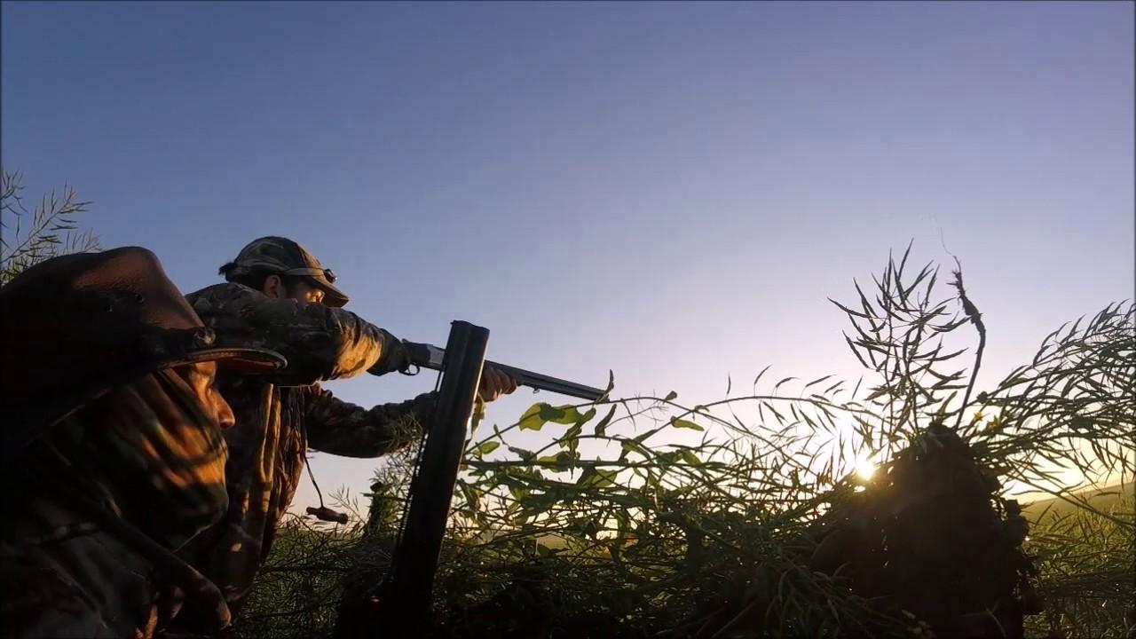 Régulation de corvidée  -la chasse par abel-GOPRO HERO 5 SESSION