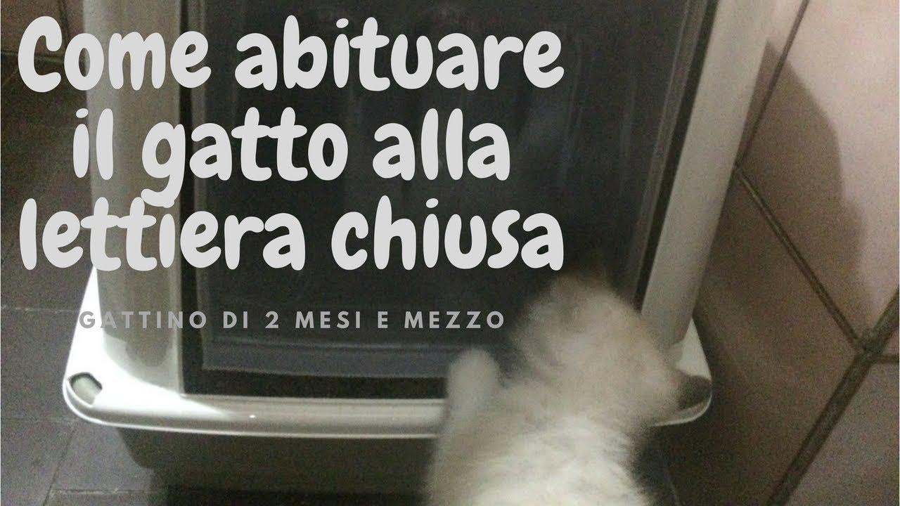 Come Abituare Il Gatto Alla Lettiera Chiusa Kitten Pooping Gatto