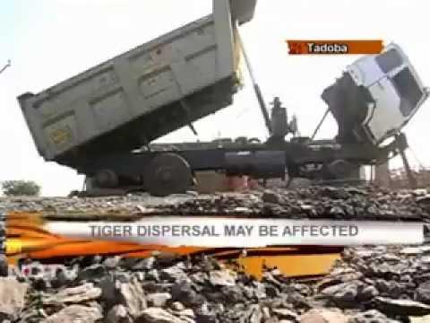 Tadoba: Mining into tigers' den?