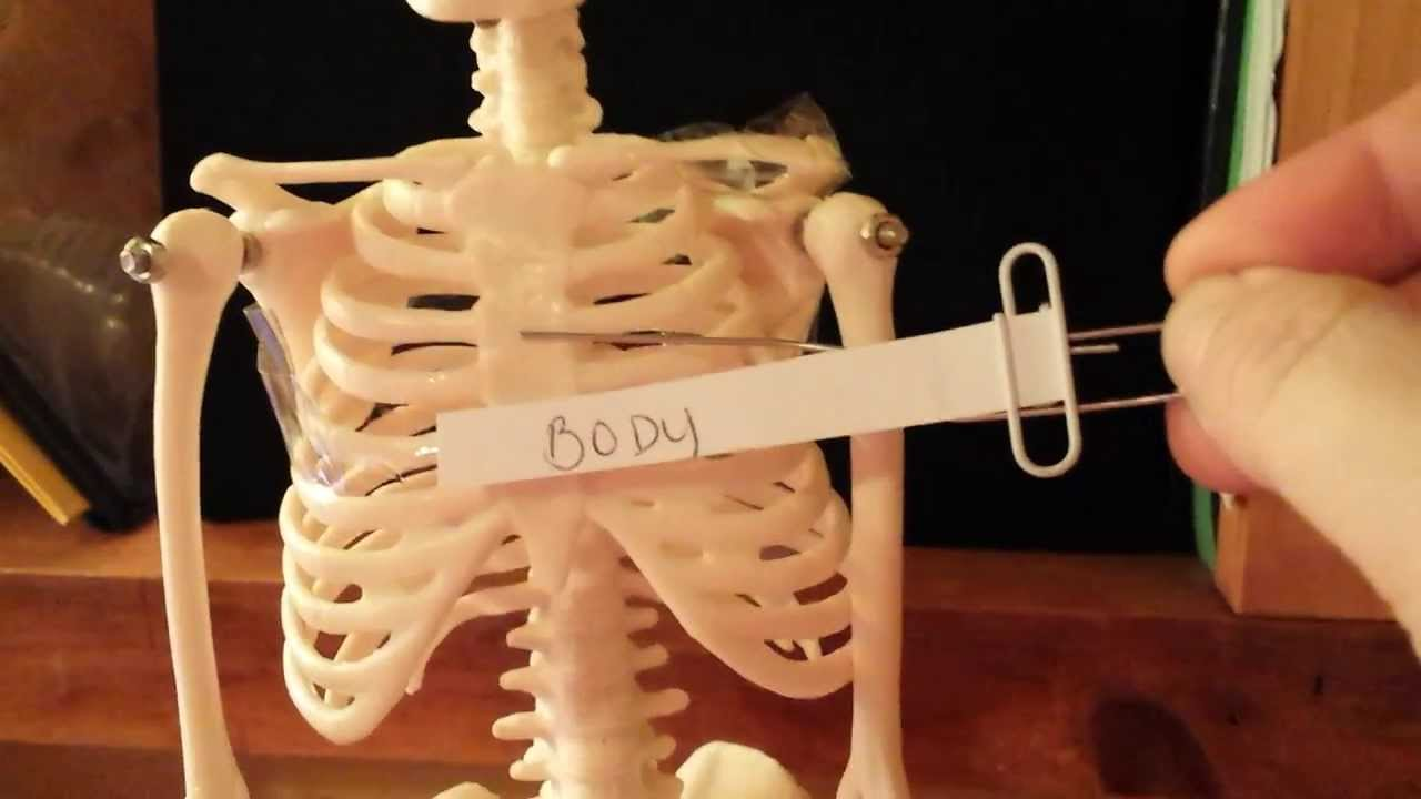 Skeleton Lab Practical - YouTube