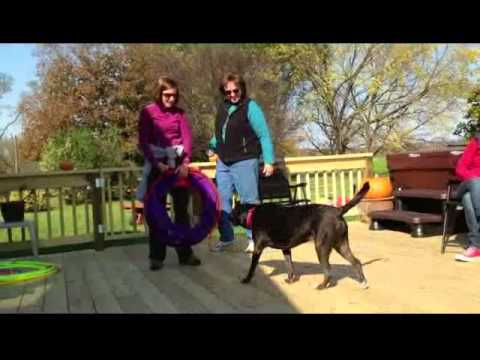 Animal Assisted Play Therapy: Sample Role-Play with an Anxious Child (structured activity)