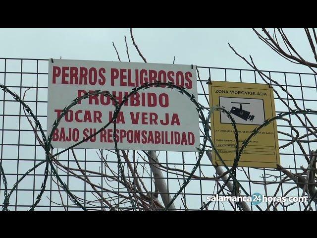 ¿Es correcta la legislación sobre perros peligrosos en Salamanca?