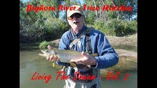 Bighorn River Trico 2018: Living The Dream Volume 2