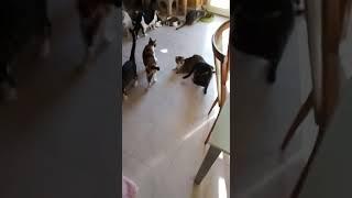 Alla Cat Base si gioca