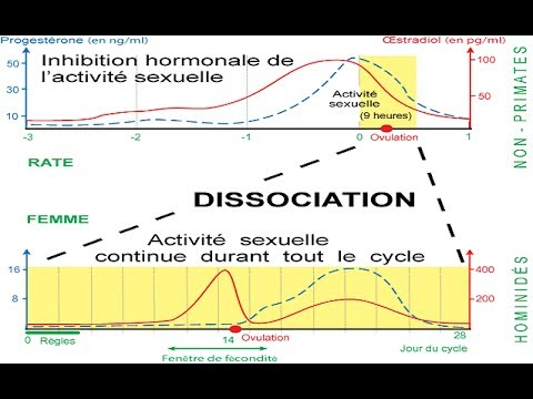 calcul du cycle de la femme