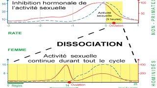 Cycle irrégulier et date d'ovulation