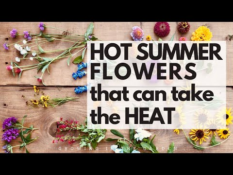 10 HOT SUMMER garden FLOWERS that take the HEAT – plus TIPS for WHEN and HOW to plant them