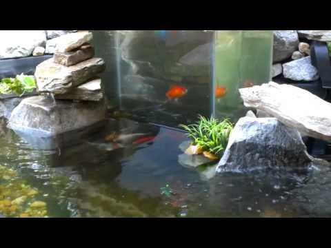 Bottomless Tank In Koi Pond Youtube