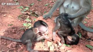 Life Billy Ep 58 - The Youngest Baby Monkey Play thumbnail