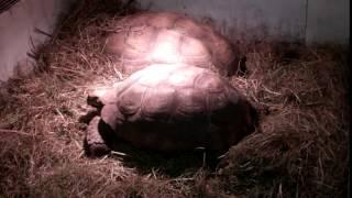 Will's Wild Animal Encounters at Hoo Farm - 1/11/2015 65