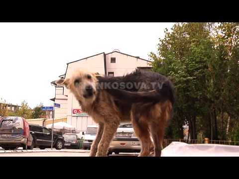 Qente endacake rrezik per qytetaret e Prishtines - 24.05.2016 - Klan Kosova