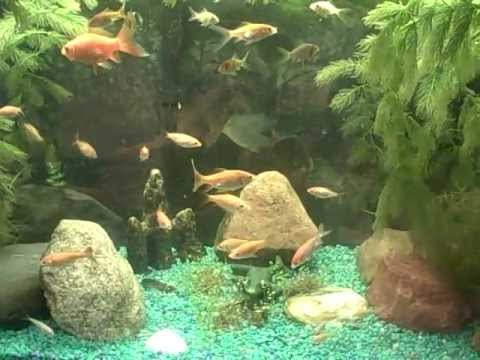 Update on the baby goldfish how to raise and care for for Goldfish pond care