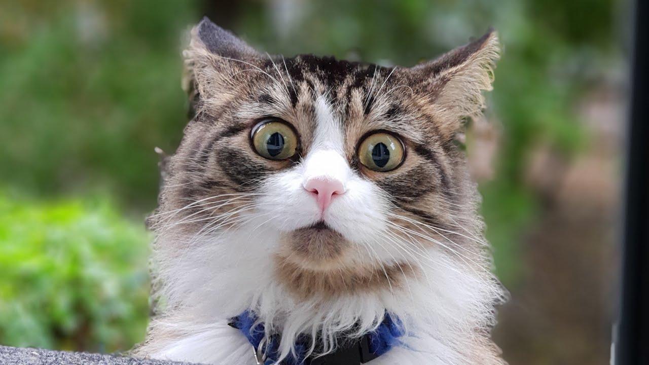 Мурлок - кот, который как собака, только сова - YouTube