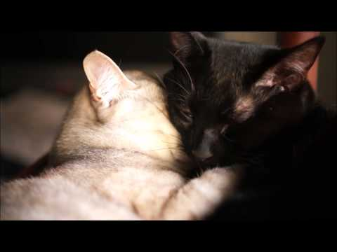 仲良しすぎる猫のお昼寝