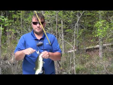 Lake Okhissa Sightfishing