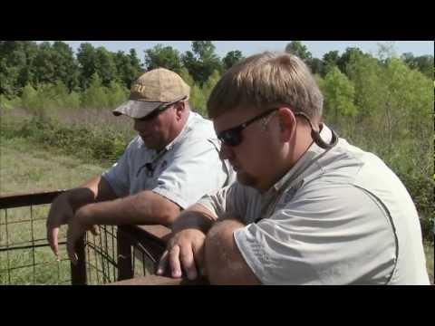 Louisiana Feral Hogs - America's Heartland