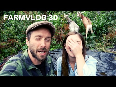 goats-in-the-garden-|-kitchen-garden-makeover-|-farmvlog-30