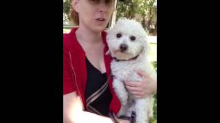 Adopted! Louie, 8 Month Old Poodle-maltese