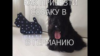 Как перевезти собаку на самолете из России в Германию(, 2016-01-18T05:47:33.000Z)
