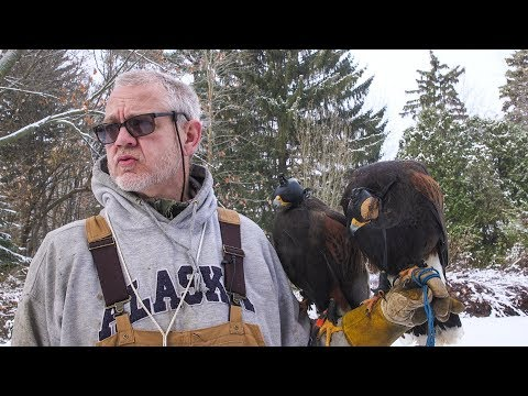 Watch Upstate NY Hunter Use Hawks To Stalk Squirrel