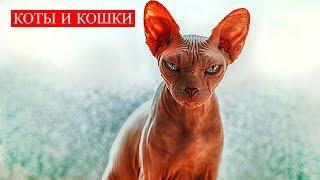 Коты и Кошки | Они пришли наблюдать за людьми