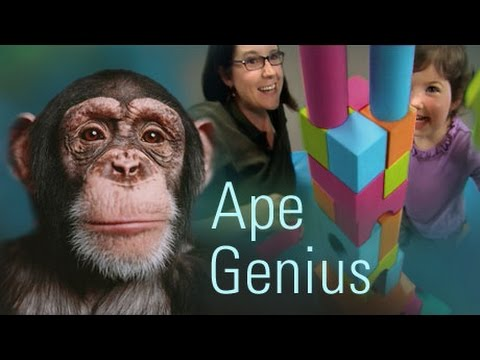 Nova - Ape Genius (PBS Documentary)