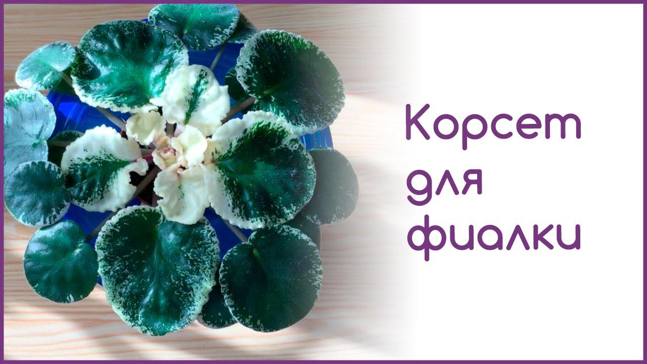 Коллекция цветов волковской оксаны flowersi. Com. Ua. Гладиолусы, глоксинии, ирисы, лилии,фиалки. Частная коллекция. Огромный выбор. Доставка по.