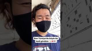 Malezya'da Kadıköy'de ki ünlü tombili kedisinin kayıp ikiz buldum ❗️
