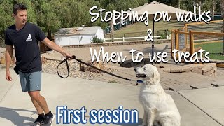 How to get your dog to sit next to you on a walk without a verbal cue