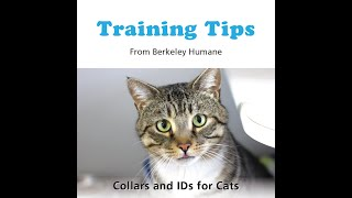 Training Tips: Collars and IDs for Cats!