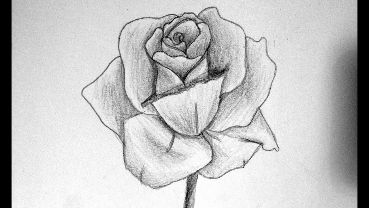 Comment Dessiner Une Rose Youtube
