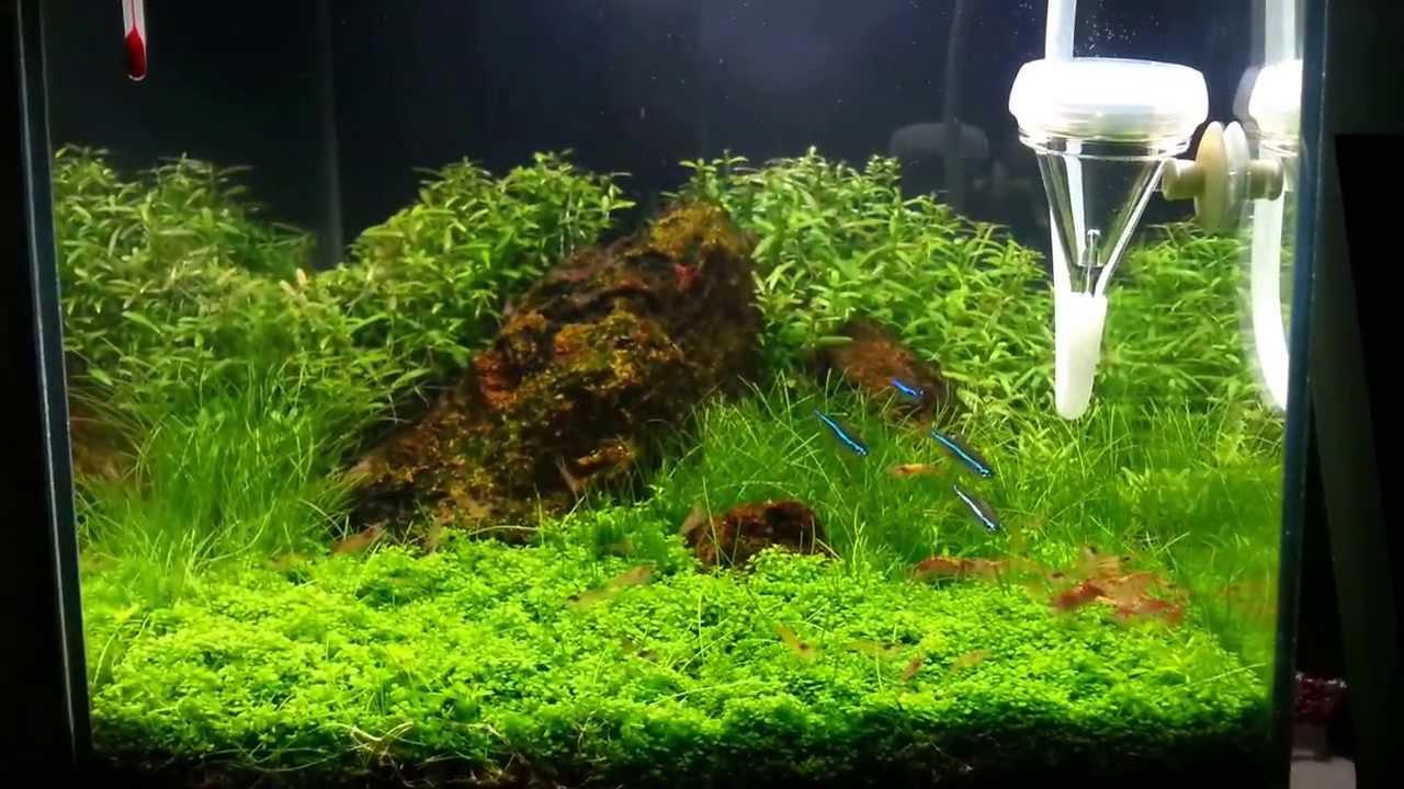 Nano plantado 19 litros blog aqua v cio youtube for Acuario 90 litros