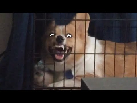 Try Not To Laugh | Funny Pet Video Compilation 2020 | The Pet Collective